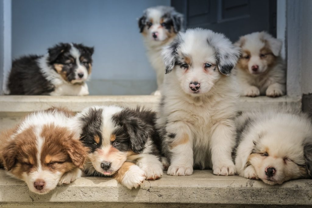 Kwinana Puppy Preschool