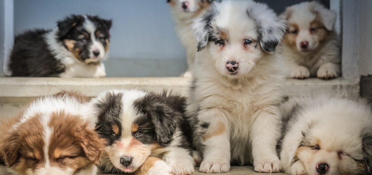 Kwinana Puppy Preschool