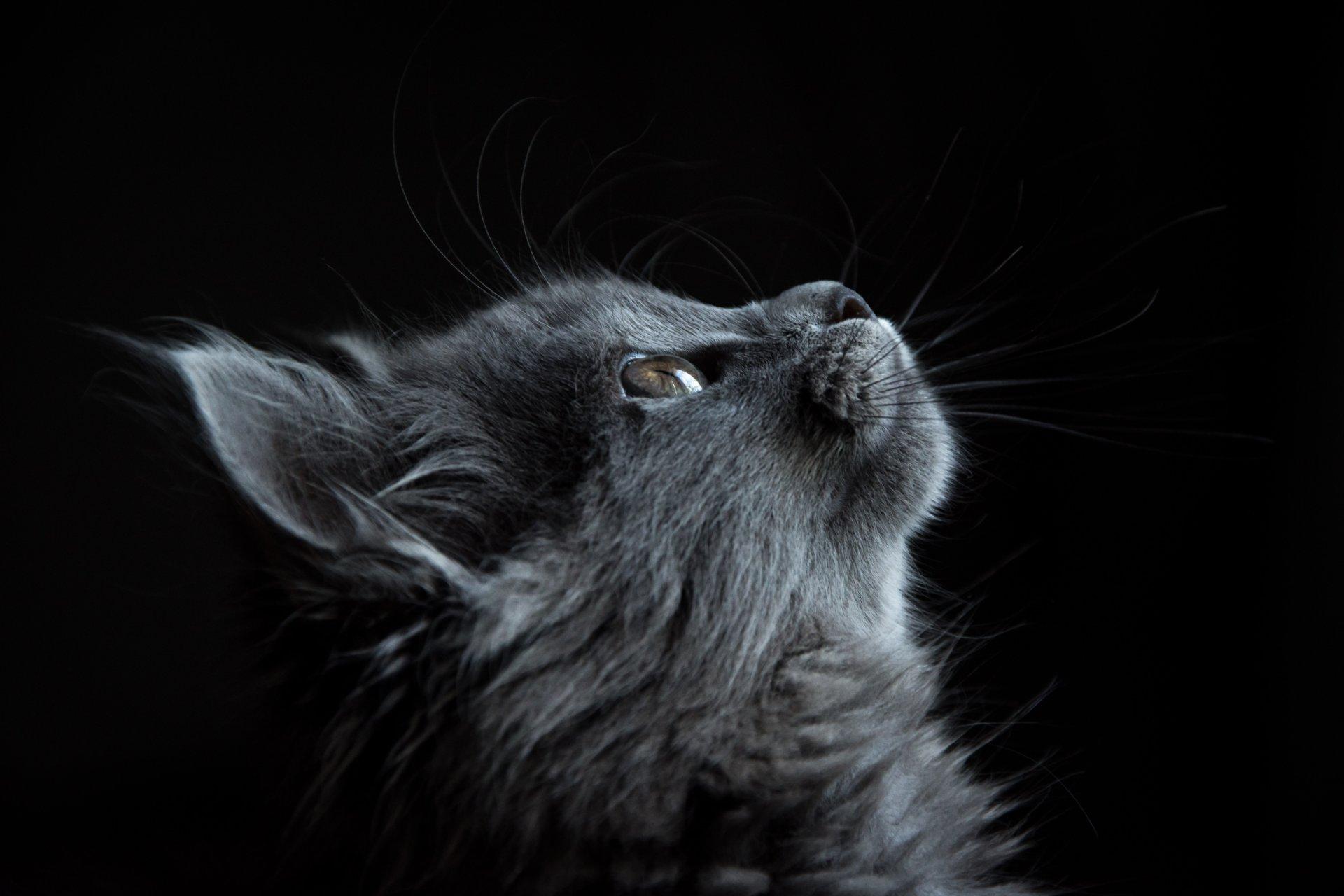Kwinana Vet Cat