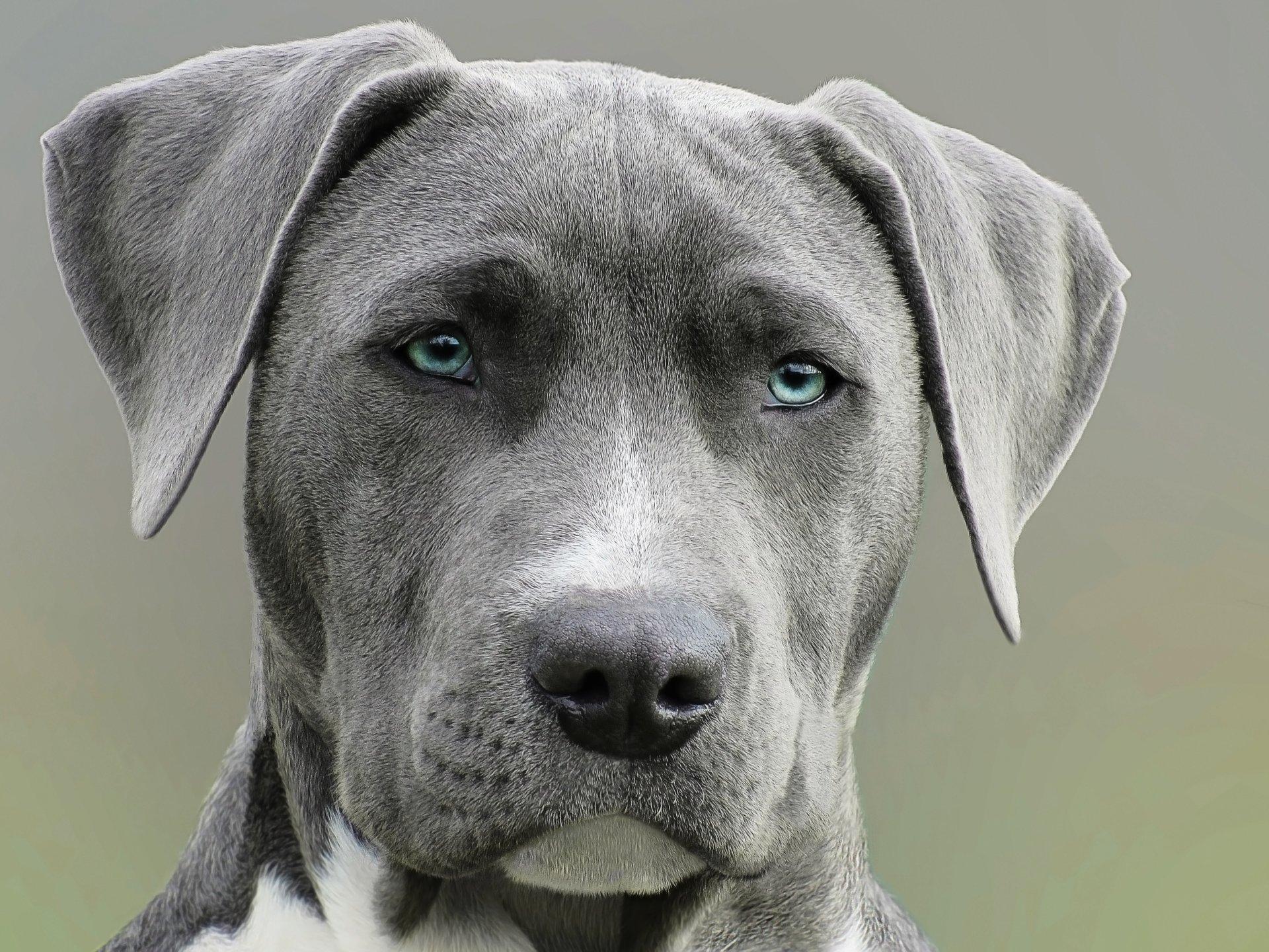 Kwinana Vet Dog