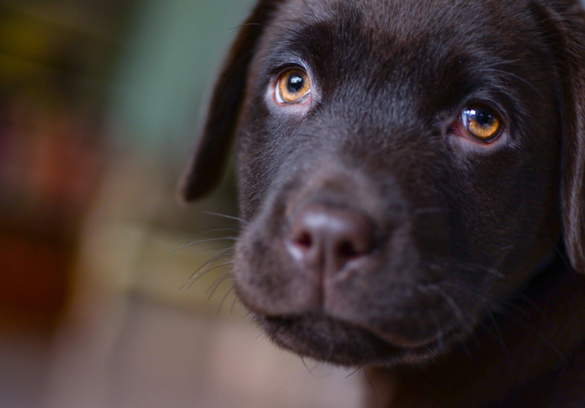 Kwinana Vet Puppy