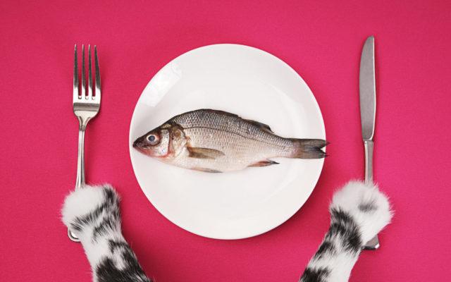 The Cat's Dinner