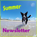 Kwinana Vet Summer Newsletter