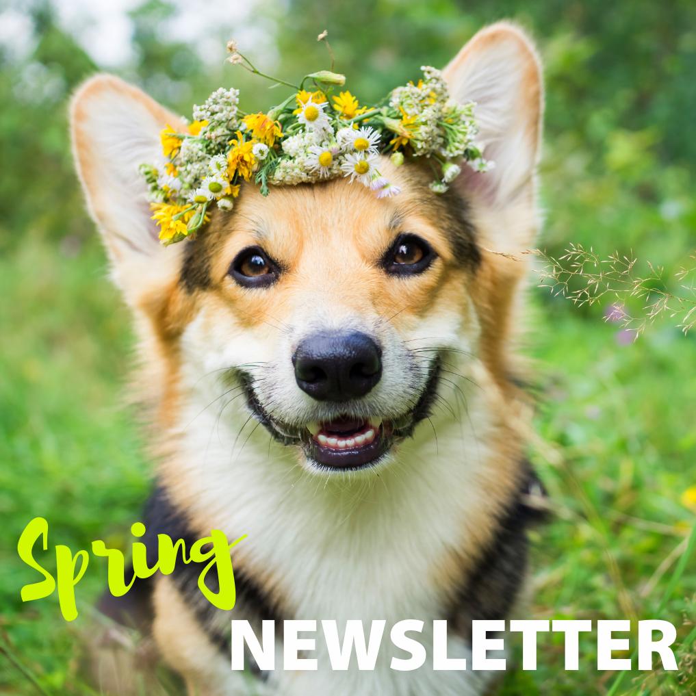 Kwinana Vet Newsletter Spring 2019